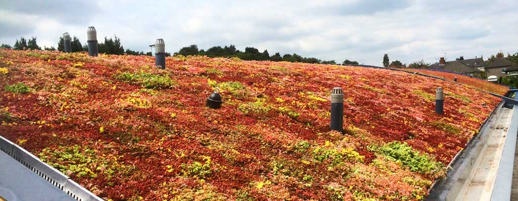 Green-Roof-Installers-Skipton-North-Yorkshire