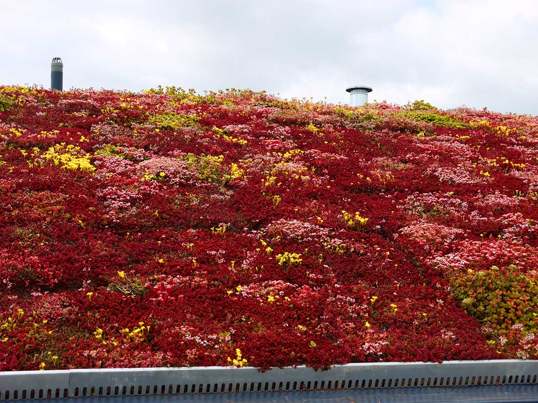 Green Roofs Naturally Bradford 2
