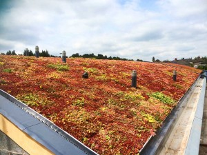 Green-Roofs-Naturally-Bradford-3
