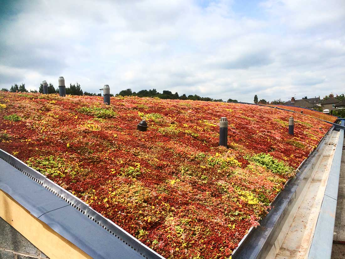 Green Roofs Naturally Bradford 3