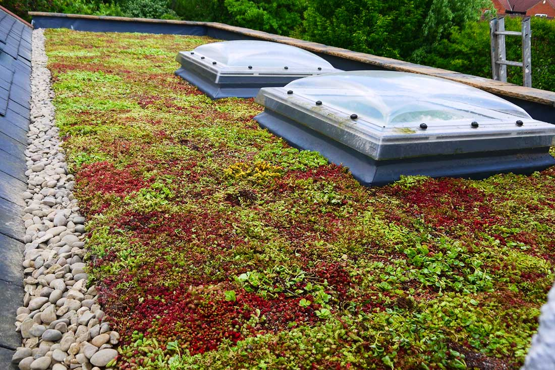 Green Roofs Naturally York