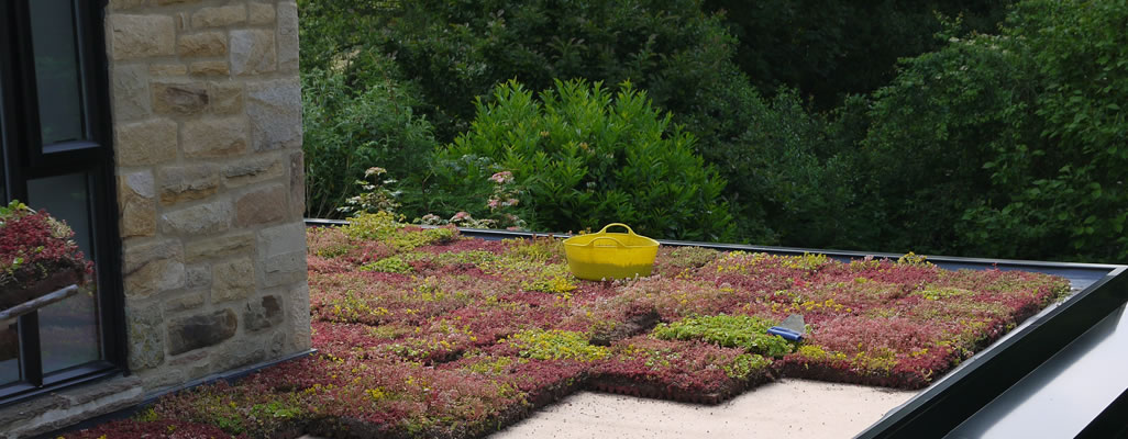 laying-a-green-roof