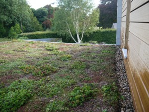 green Roofs Naturally BIW2