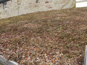 Green roofs naturally Shed 11th March