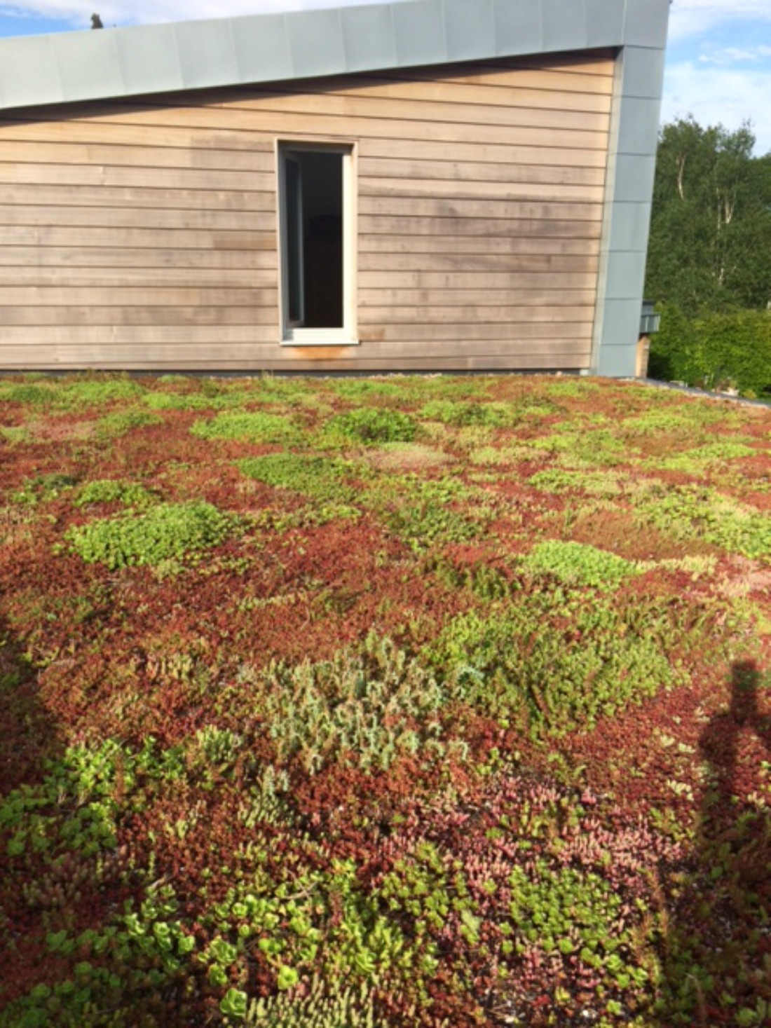 A Beautifully Developing Sedum Roof Green Roofs