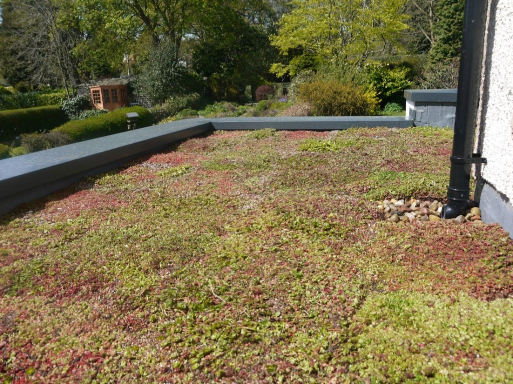Beautifying A House Extension Green Roofs Naturally Otley