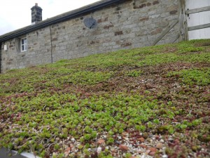 sedum shed April green roofs naturally