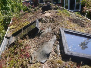 before Green Roofs Naturally