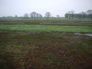 GRN sedum field in winter