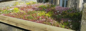 DIY log store 2 Green Roofs Naturally