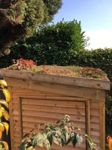 DIY sedum Shed Green Roofs Naturally