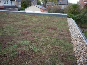 HARROGATE GARAGE ROOF GREEN ROOFS NATURALLY 2